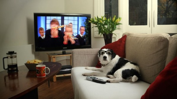 3dtv-for-the-dogs-625x352