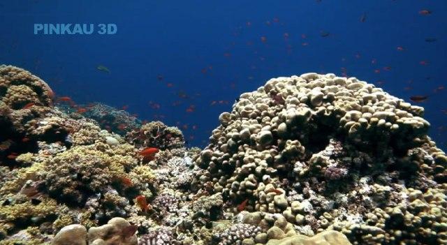 Ocean Dive 3D («Погружение на дно океана 3D») от Pinkau Interactive Entertainment