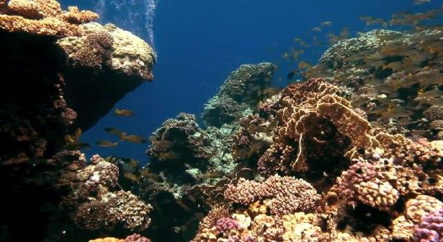 Ocean Dive 3D: подводный мир в 3D-формате