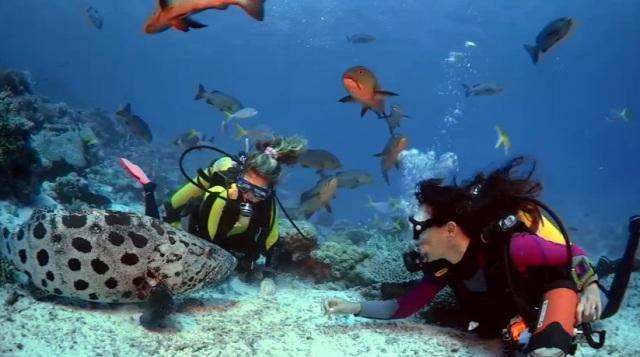 «Приключения на Коралловом рифе» (Coral Reef Adventure) онлайн