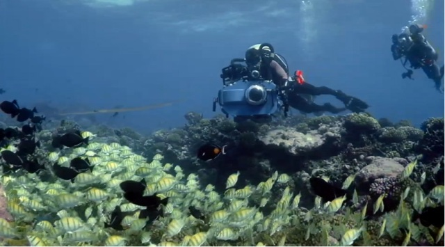 3D-фильм «Приключения на Коралловом рифе» (Coral Reef Adventure) онлайн