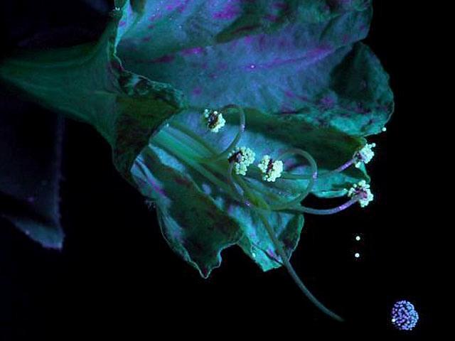 «Царство растений» Дэвида Аттенборо в 3D на Nintendo 3DS XL