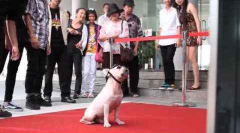 Умные ТВ LG CINEMA 3D: тестировалось на животных!