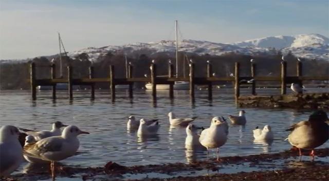 YouTube стерео 3D: птицы на озере Уиндермер