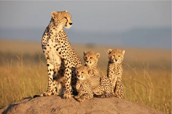 «Африка 3D: Самое дикое место на Земле» - 3D-фильм от BBC Earth