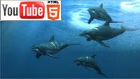 Красота подводного мира – в YouTube стерео 3D-анимации