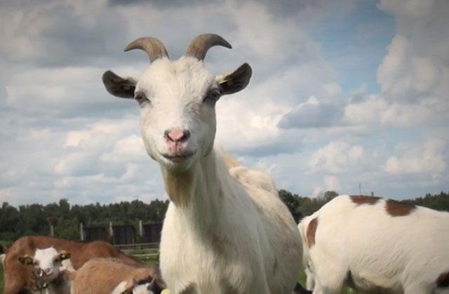 3D-экскурсия по зоопаркам на YouTube стерео 3D