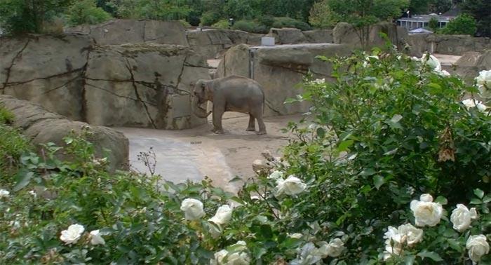 Зоопарки Кельна и Бристоля – на YouTube 3D