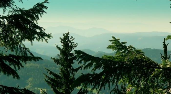 YouTube стерео 3D-трейлер к документальной ленте «Чёрный лес 3D» (BlackForest 3D)