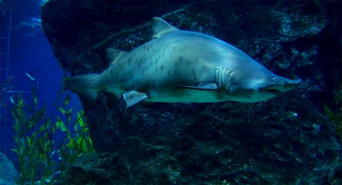 YouTube стерео 3D-трейлер «Плавая среди акул» (Swimming with Sharks)