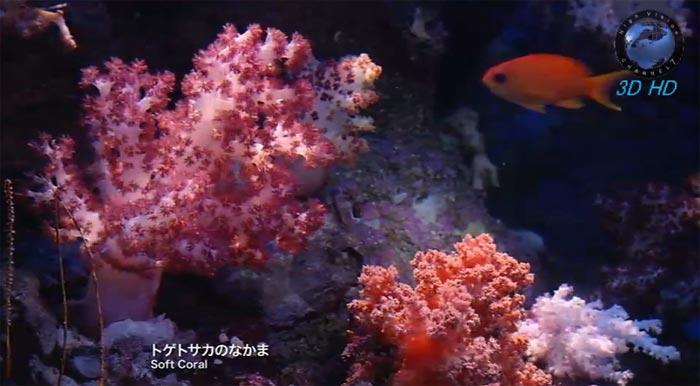 Японский океанариум Тюрауми (Okinawa Churaumi Aquarium) на YouTube стерео 3D: Мягкие кораллы