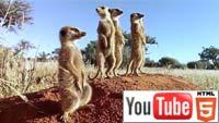 «Сурикаты Калахари 3D»: YouTube стерео 3D-трейлер к документалке