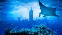 Красоты подводного мира – в стерео документалке «Последний риф 3D»