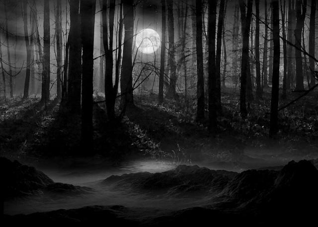 3D-картина «Голоса леса»