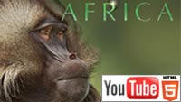 «BBC Планета. Африка» на YouTube 3D: шесть полных эпизодов!