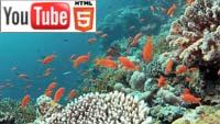 Дайвинг в Шарм-эль-Шейхе: YouTube стерео 3D-документалка