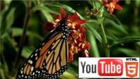 «Большие жуки 3D»: мир насекомых на YouTube 3D