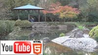 Осенний Бонн на YouTube стерео 3D