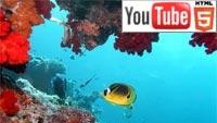 Дайвинг на острове Кокос в стерео на YouTube 3D