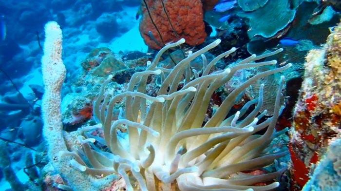 Карибский Бонэйр: знакомство с островом на YouTube 3D