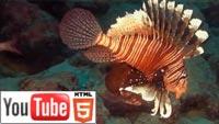 Подводный мир в стерео 3D: свежее пополнение на YouTube 3D