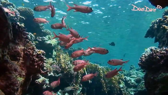 Подводный мир в стерео 3D: свежее YouTube-видео