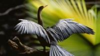 Документальный 3D-фильм «Амазония: Инструкция по выживанию»