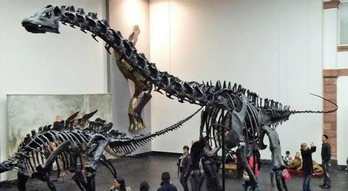 Зенкенбергский музей: трёхмерная экскурсия на YouTube 3D