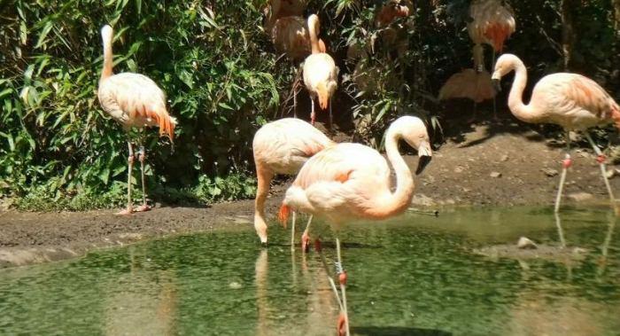 3D-прогулка по зоопаркам: свежее видео на YouTube 3D