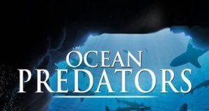 Хищники океанов 3D (Ocean Predators): полнометражная документалка на YouTube