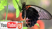 Букашки! Приключения в тропическом лесу: о жизни насекомых на YouTube 3D