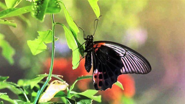Букашки! Приключения в тропическом лесу (Bugs! A Rainforest Adventure): из жизни насекомых на YouTube 3D