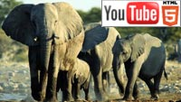 YouTube стерео 3D: мир живой природы в трёх измерениях