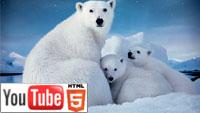 Арктика 3D: 40-минутная документальная лента IMAX на YouTube