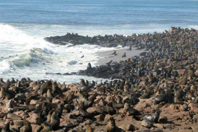 Мыс Кейп-Кросс и Свакопмуд: прогулка по Намибии на YouTube 3D
