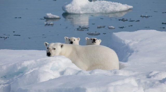 В Арктику 3D (To The Arctic): документальная лента IMAX на YouTube
